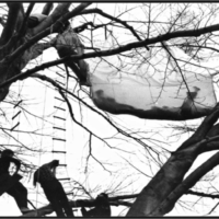 14-Gordon-Matta-Clark-Tree-Dance-1973-