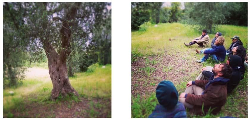 08-olive-tree